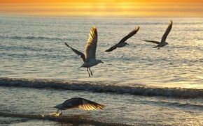 Picture sea, wave, sunset, birds, seagulls, Wallpaper from lolita777