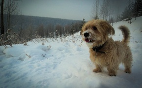 Picture forest, snow, Winter, dog