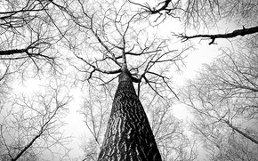 Picture tree, black & white, tree