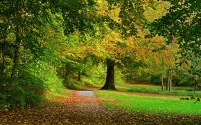 Picture road, autumn, forest, leaves, trees, nature