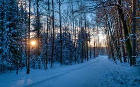 Picture winter, forest, the sun, rays, snow, trees, sunset, traces, Park, the evening, track, path
