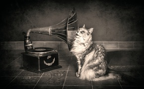 Picture cat, gramophone, hearing