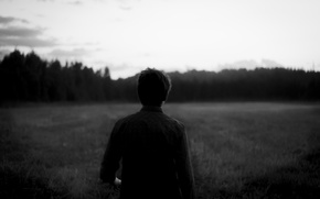 Picture field, forest, the sky, fog, Guy