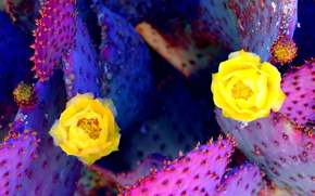 Picture flowers, desert, plant, cactus