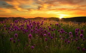 Picture field, sunset, flowers