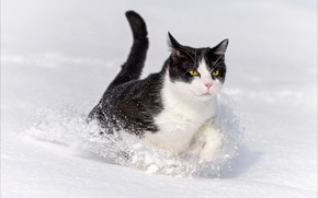 Wallpaper winter, animals, cats, Oscar, Winter, animals, cat, wallpapers, Oscar