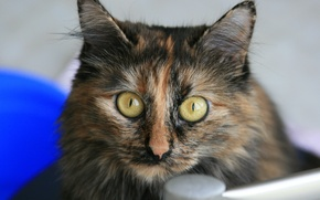 Picture cat, eyes, look, cats, each, animal, Wallpaper, colorful