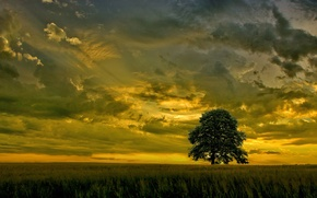 Picture field, the sky, sunset, clouds, tree