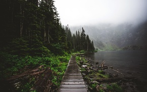 Picture forest, trees, fog, lake, Nature, morning