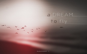 Picture dream, minimal, fly, alexander y