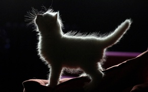 Picture baby, kitty, black background