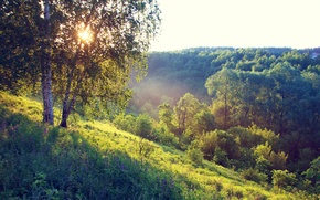Picture forest, summer, grass, the sun, trees, fog, morning, hill, birch