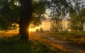 Picture road, grass, the sun, trees, landscape, sunset, nature, trail, the evening, Germany, path, the countryside, ...