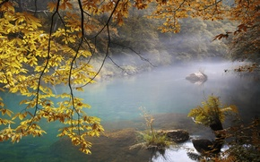 Picture autumn, forest, leaves, trees, branches, fog, river