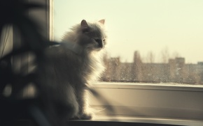 Picture cat, eyes, look, blue, window
