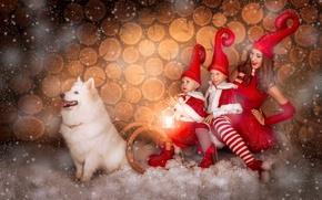 Picture girl, snow, children, dog, sleigh, caps, Samoyed