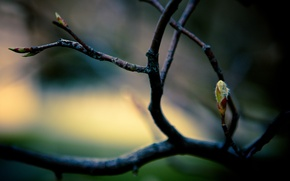Picture leaves, macro, branches, branch, spring