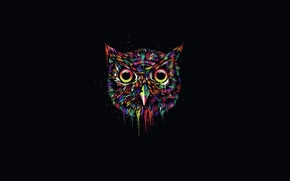 Picture the dark background, owl, paint, minimalism, owl