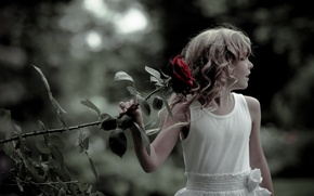 Picture mood, rose, girl