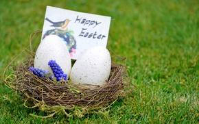 Picture grass, flowers, egg, Easter, socket, easter
