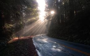 Picture road, forest, the sun, landscape, nature