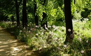 Picture summer, grass, the sun, trees, landscape, flowers, glare, widescreen, Wallpaper, shadows, wallpaper, alley, widescreen, background, …