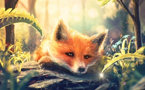 Picture Fox, art, grass, muzzle, drop, fox, Fox, forest