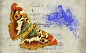 Picture background, texture, butterfly