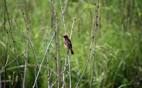 Picture summer, branches, animal, bird, the bushes, little