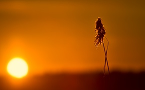 Picture the sun, light, sunset, a blade of grass, panicle
