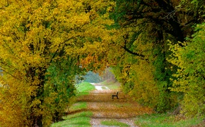 Picture autumn, leaves, trees, bench, nature, colorful, track, falling leaves, trees, nature, Autumn, leaves, path