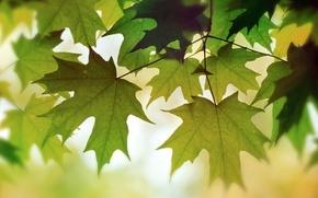 Picture autumn, foliage, color