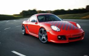Picture road, red, tree, Porsche, porsche, Porsche