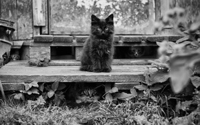 Picture leaves, cats, cats, kittens, leaves, cats, bossy cat, kittens