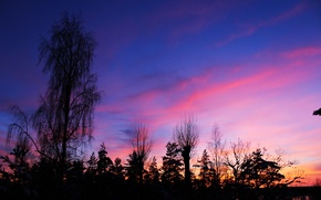 Picture winter, forest, the sky, clouds, trees, landscape, sunset, nature, real photo