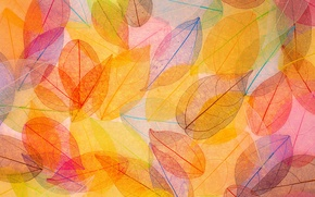 Picture leaves, background, colorful, abstract, autumn, leaves, autumn, transparent
