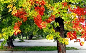 Picture autumn, leaves, Park, tree
