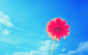 Picture flower, summer, the sky, Nature