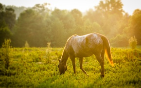 Picture greens, animals, grass, leaves, the sun, trees, tree, horse, widescreen, Wallpaper, foliage, horse, meadow, wallpaper, ...
