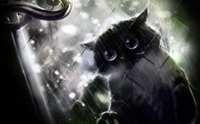 Picture black cat, handle, window, rain