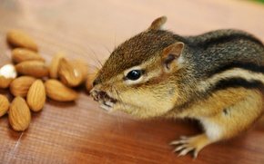 Picture animal, Chipmunk, nuts, almonds