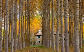 Picture autumn, alley, Spain