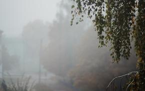 Picture leaves, fog, tree, minimalism, morning, birch, morning mist