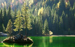 Picture forest, trees, rock, lake, island, slope