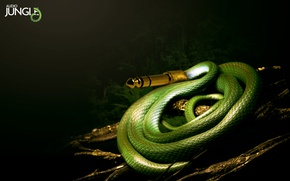 Picture snake, Music, jungle
