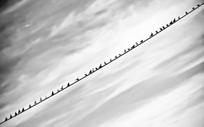 Picture the sky, birds, background