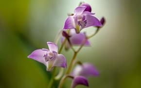 Picture flower, stems, petals, purple flower