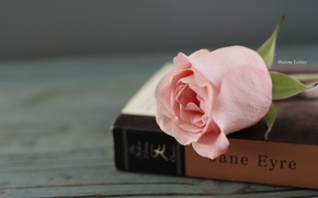 Picture leaves, flowers, background, Wallpaper, pink, mood, rose, book, owner, wallpapers, flower