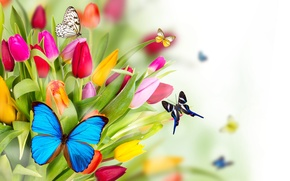 Wallpaper butterfly, flowers, spring, tulips