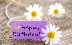 Picture flowers, chamomile, flowers, Happy, Birthday